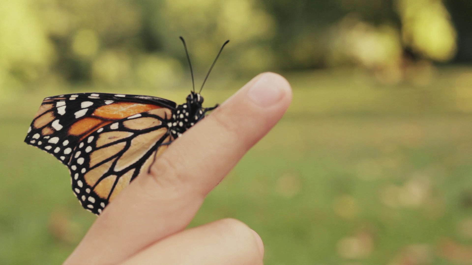 Butterflies altcineaction biocorpaavc Gallery